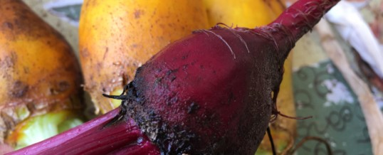 The Beet Goes On